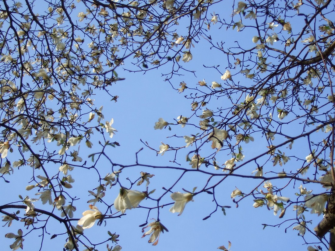 春遠野のもう一つのハナ・・・_d0001843_13281679.jpg