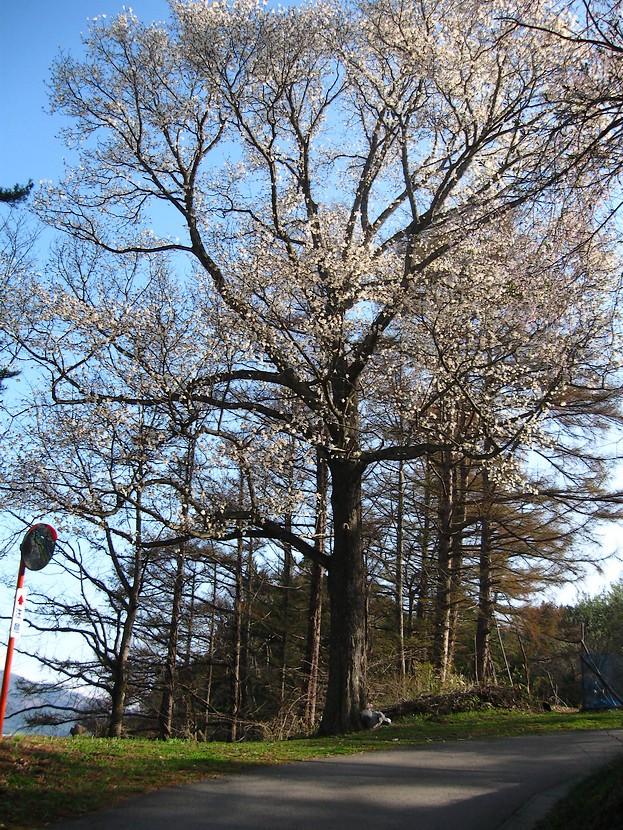春遠野のもう一つのハナ・・・_d0001843_1328471.jpg