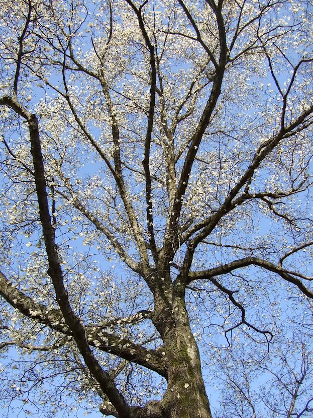 春遠野のもう一つのハナ・・・_d0001843_22181324.jpg