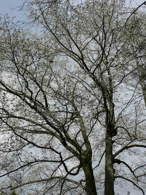 春遠野のもう一つのハナ・・・_d0001843_2341179.jpg