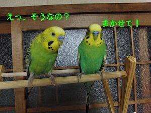 f0196665_012712.jpg