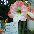 函館市営熱帯植物園の写真_b0106766_1533240.jpg
