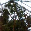 函館市営熱帯植物園の写真_b0106766_153622.jpg