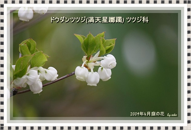 f0104569_16304978.jpg