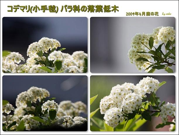 f0104569_16391034.jpg