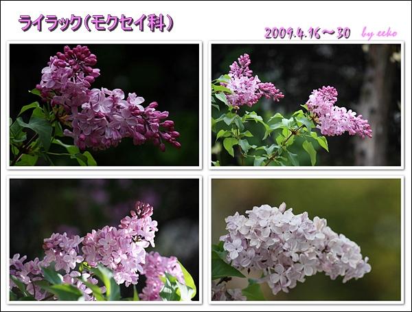 f0104569_16485061.jpg