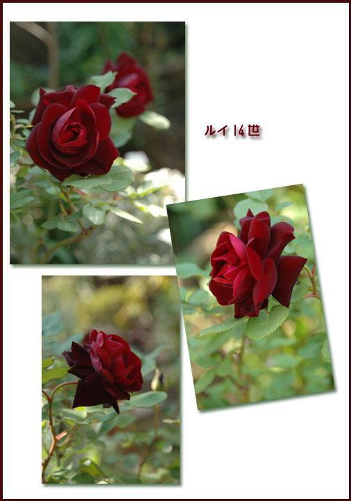a0073275_19545750.jpg
