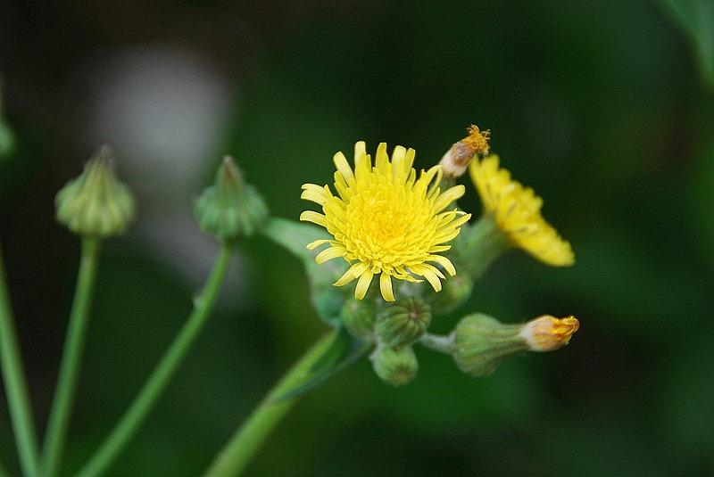 初夏の花々_c0187781_11382236.jpg