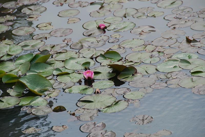 初夏の花々_c0187781_1143183.jpg