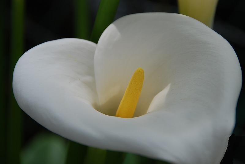 初夏の花々_c0187781_11435926.jpg