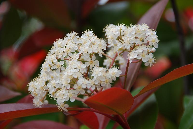 初夏の花々_c0187781_11473556.jpg