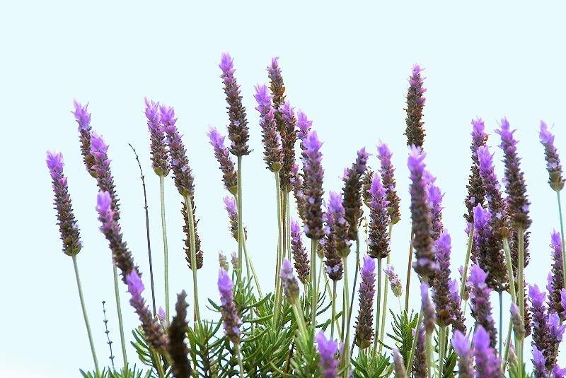 初夏の花々_c0187781_11525635.jpg