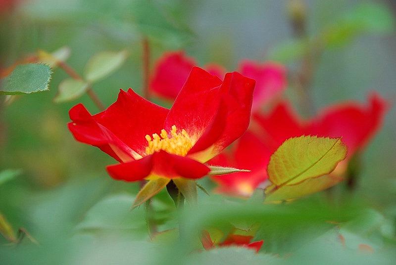 初夏の花々_c0187781_1203164.jpg