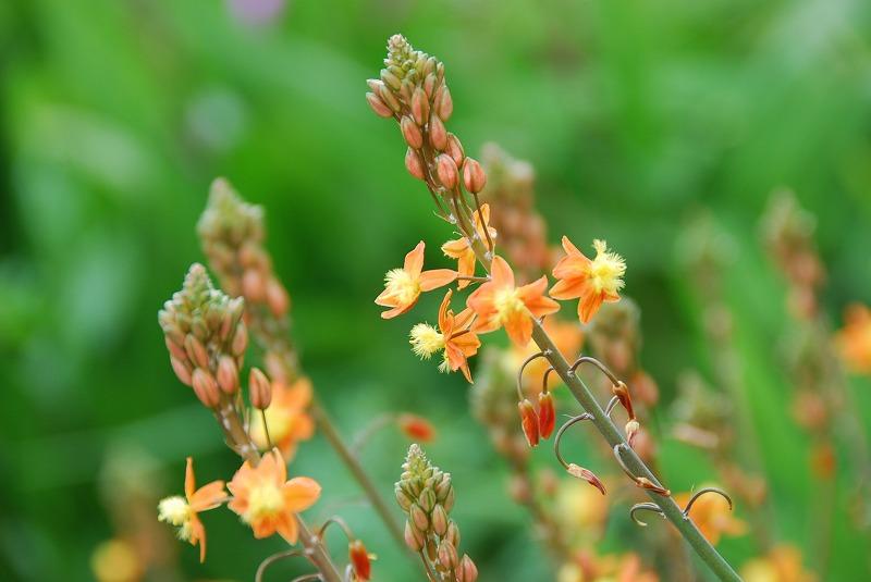 初夏の花々_c0187781_1210775.jpg