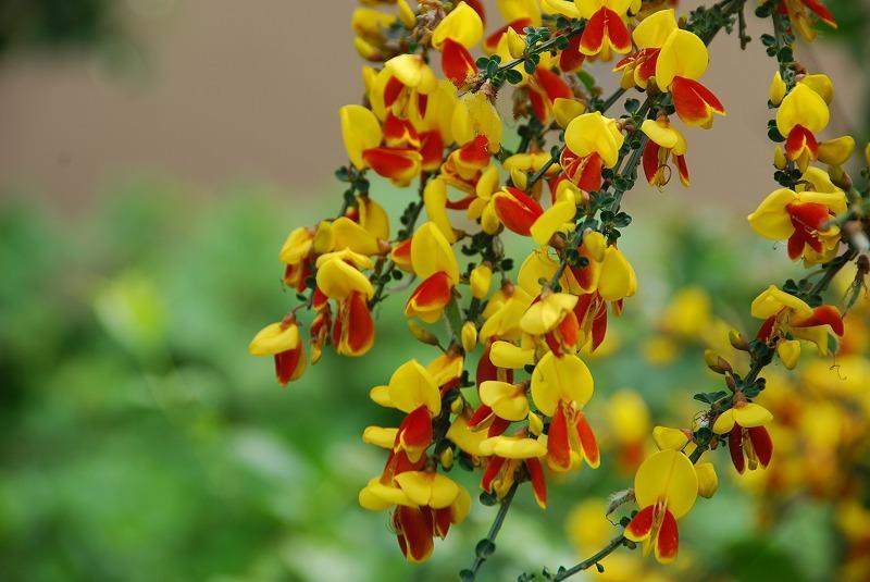 初夏の花々_c0187781_1264087.jpg