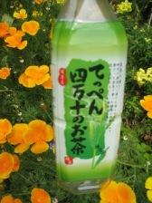 高知県 津野町_d0043390_15315627.jpg