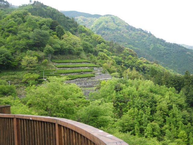 高知県 津野町_d0043390_15796.jpg