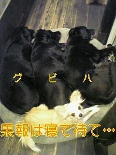 f0148927_1752502.jpg