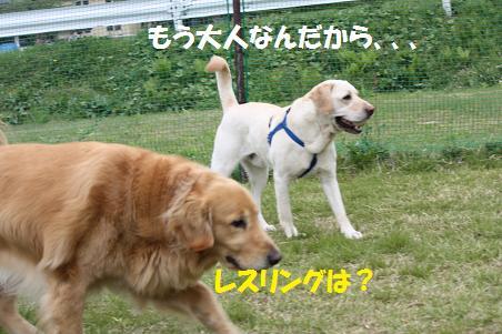 f0114128_1811915.jpg