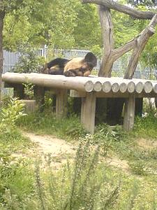 神戸王子動物園~パンダがいるのだ!~ #347_e0068533_1573739.jpg