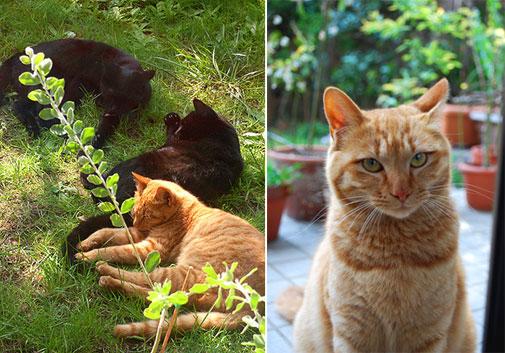 箱猫_c0120342_1156576.jpg