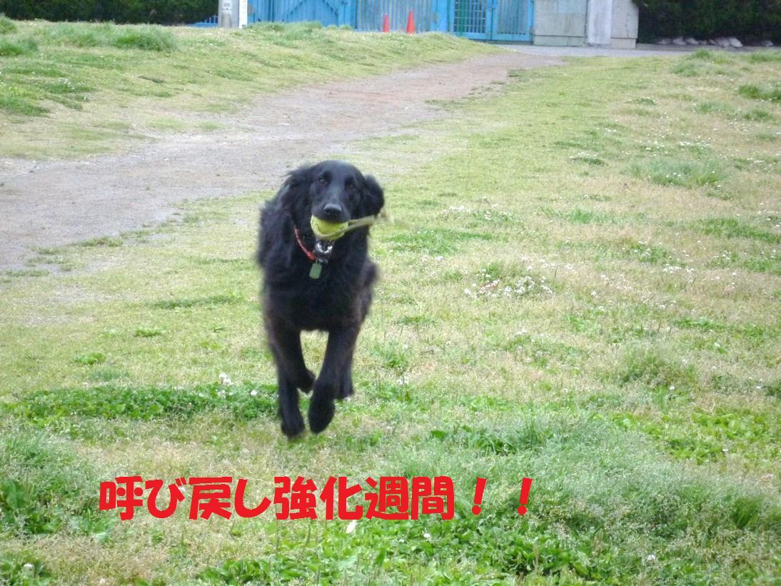 a0104464_1435447.jpg