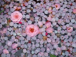 花いかだ_b0123970_1031237.jpg