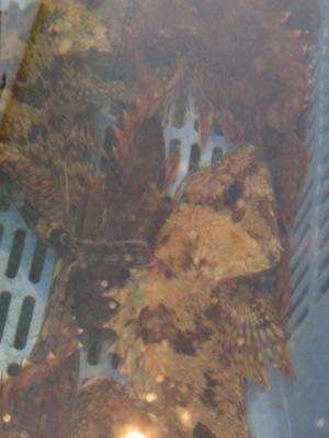 """佐伯路の旅景(その1)・・・上浦町""""しおさいの里""""_c0001578_2217262.jpg"""