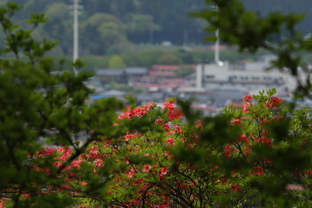 福島県塙町 「風呂山公園」の山ツツジ_e0143883_455028.jpg