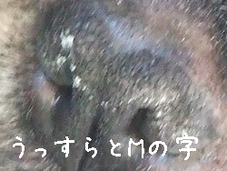 b0033186_1645487.jpg