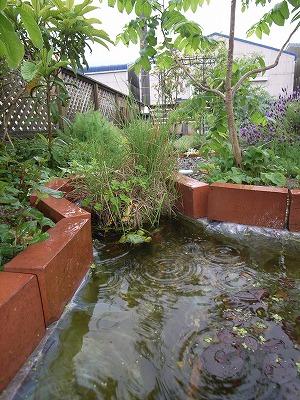 水辺の植物 ・ ビオトープ_f0059988_1828315.jpg