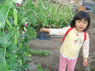 畑の野菜とマコ&FFの打ち上げ!_e0166301_2204299.jpg