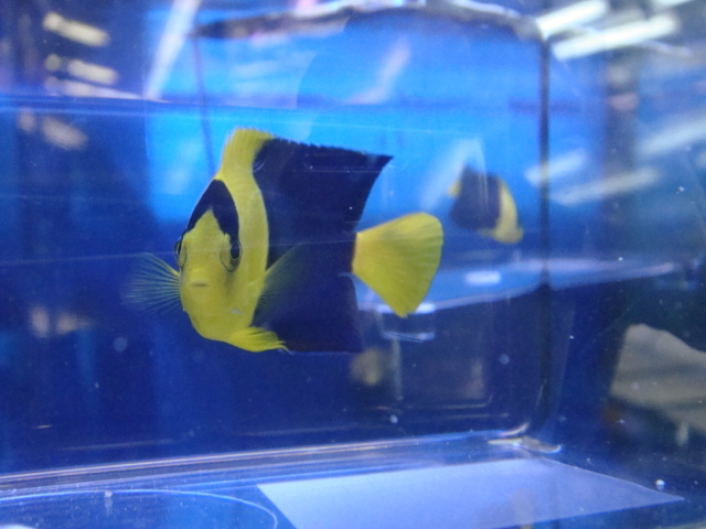 海水魚・サンゴ・水草・日本産淡水魚_f0189122_15121091.jpg