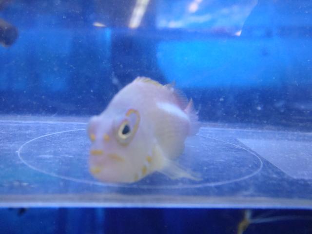 海水魚・サンゴ・水草・日本産淡水魚_f0189122_1513753.jpg