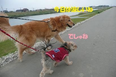 5月6日連休最後の日_f0114128_17234326.jpg
