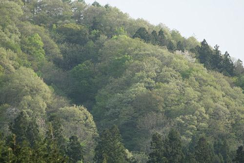 森で_a0087133_20405511.jpg