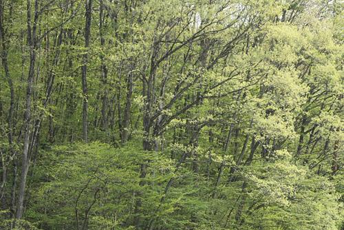 森で_a0087133_20414921.jpg