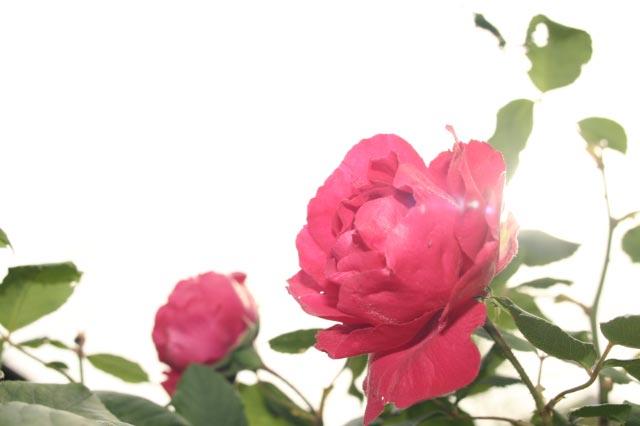 f0142736_0281595.jpg