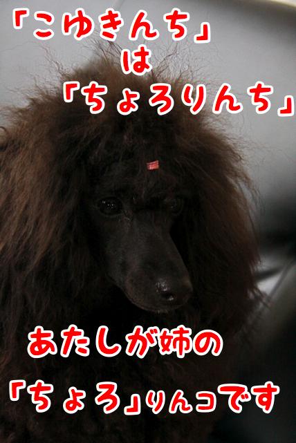 f0166359_14583829.jpg