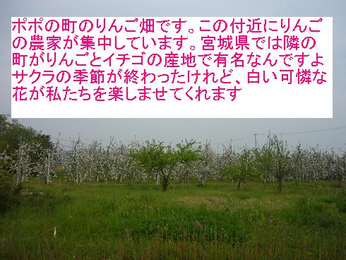 e0139167_2204343.jpg