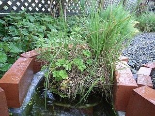 水辺の植物 ・ ビオトープ_f0059988_2040767.jpg