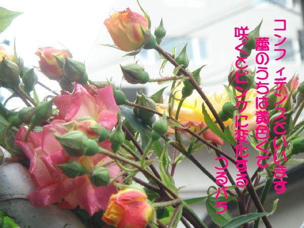 b0101991_14102622.jpg