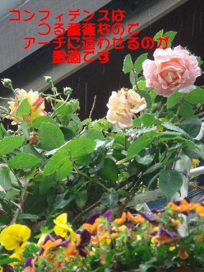 b0101991_14225486.jpg