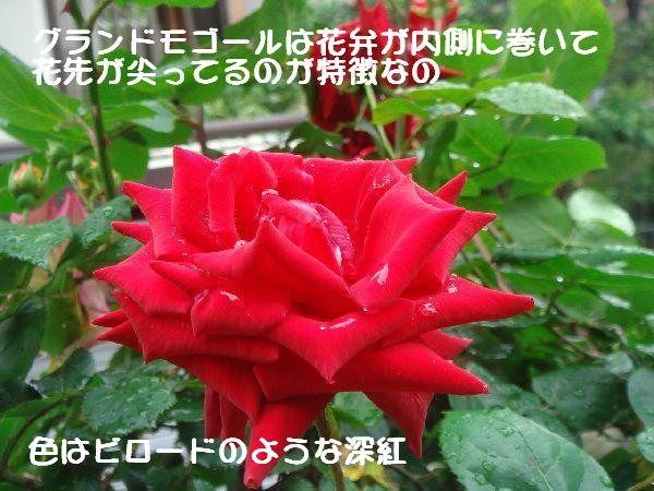 b0101991_14261684.jpg