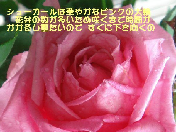 b0101991_14314795.jpg
