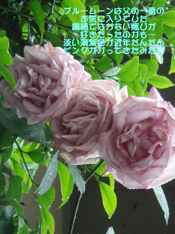 b0101991_14391319.jpg