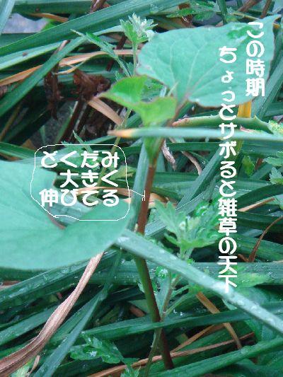b0101991_14495335.jpg
