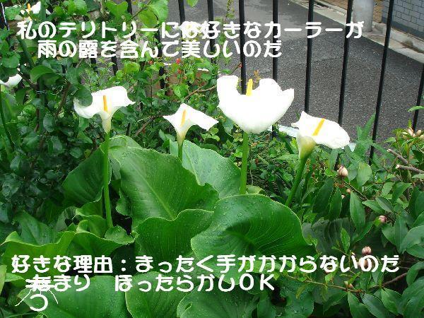 b0101991_1582215.jpg