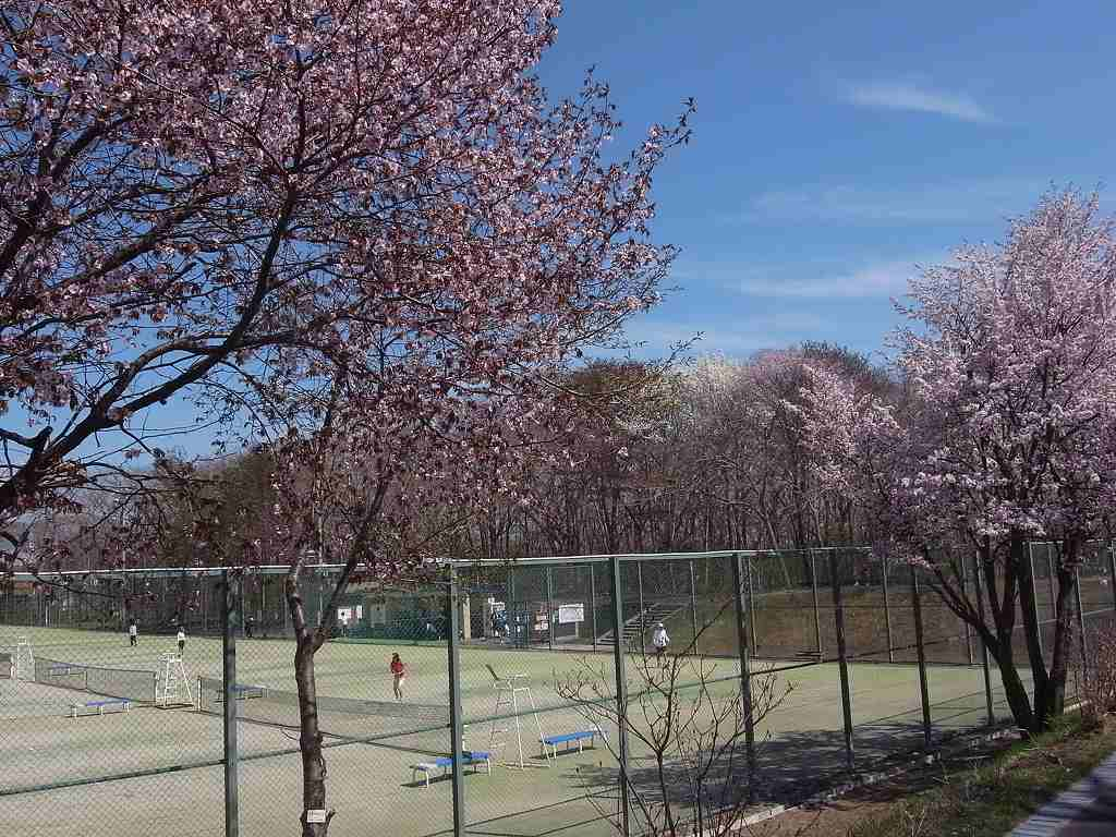 5月6日、青葉公園の花など_f0138096_16564773.jpg