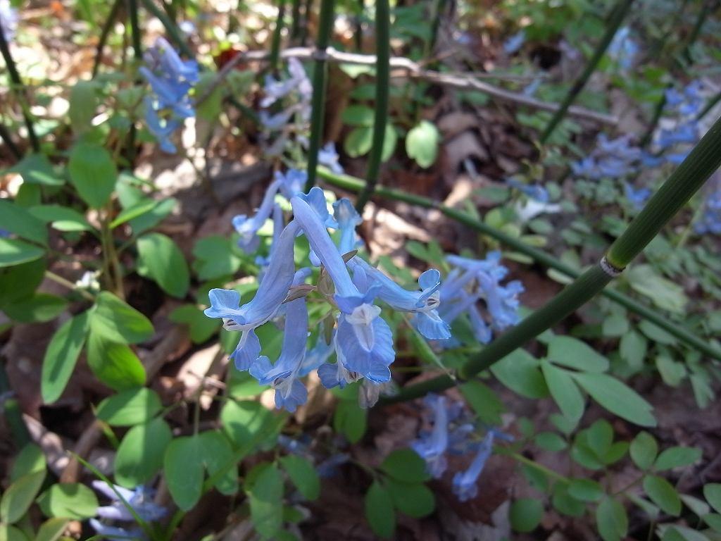 5月6日、青葉公園の花など_f0138096_16572732.jpg